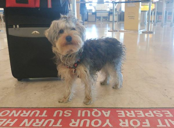 bonny-aeropuerto