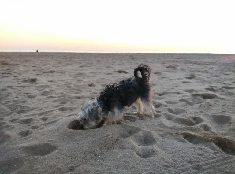 En la playa con mi perrita