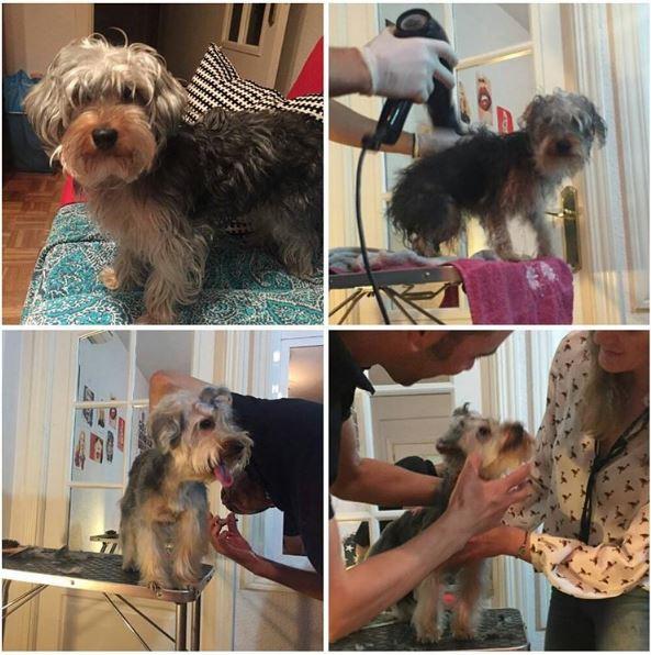proceso corte de pelo canino