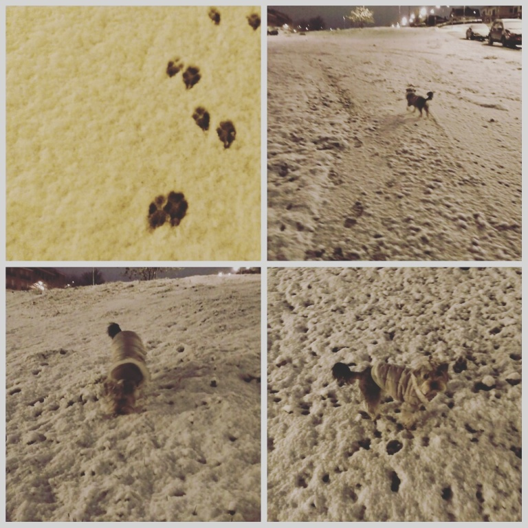 perro en la nieve.jpg