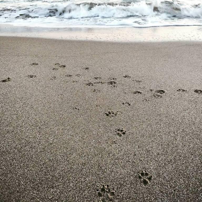 playa patitas