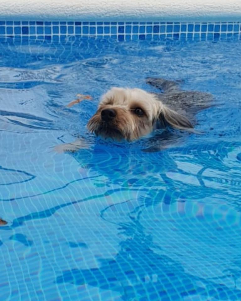 perros al agua